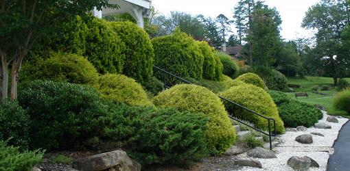 How To Plant Trees And Shrubs On A Slope Today S Homeowner