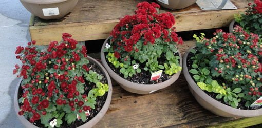 Planted containers