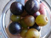 Muscadine and scuppernong grapes in bowl