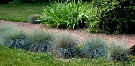 Walkway lined with blue fescue.