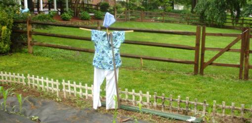 Scarecrow dressed in nursing clothes.