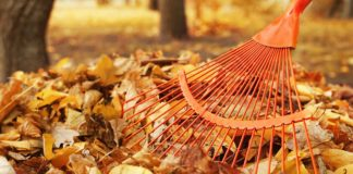 Raking leaves in the autumn