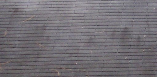 Black stains on asphalt shingle roof caused by algae growth.
