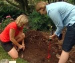 Storey Walters and Julie Day Jones planting tulip bulbs.