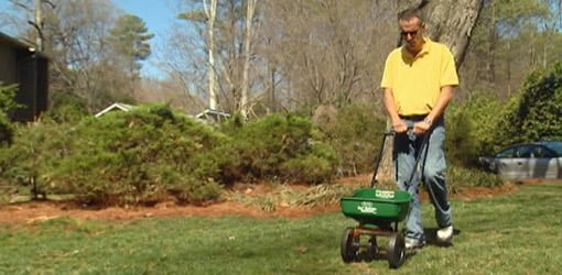 Fertilizing lawn with spreader.