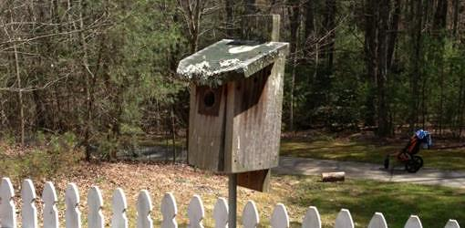 Bluebird box mounted on pole near garden.