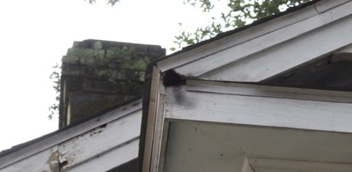 White Eave fascia board on older home with squirrel  hole.