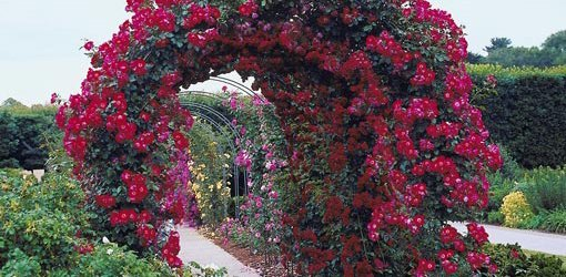 Enhance Your Pergola Or Arbor With Climbing Flowers Today S