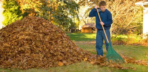 Raking leaves in yard.