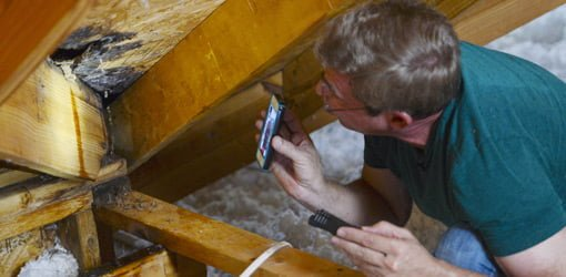 Man with smartphone tracking down roof leak in attic.