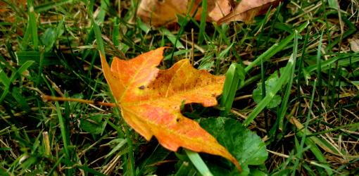 October Lawn Garden To Do List Today S Homeowner