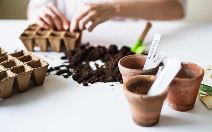 Planting seeds in miniature pots indoors