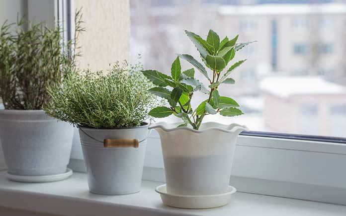 Houseplants sitting in pots on windowsill in the winter