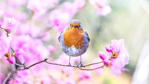 bird near flowers