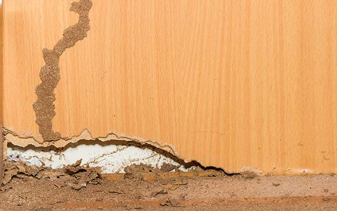 7 Signs Of Termites In Your Home Today S Homeowner