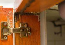 Signs of termites, damage inside a cabinet door