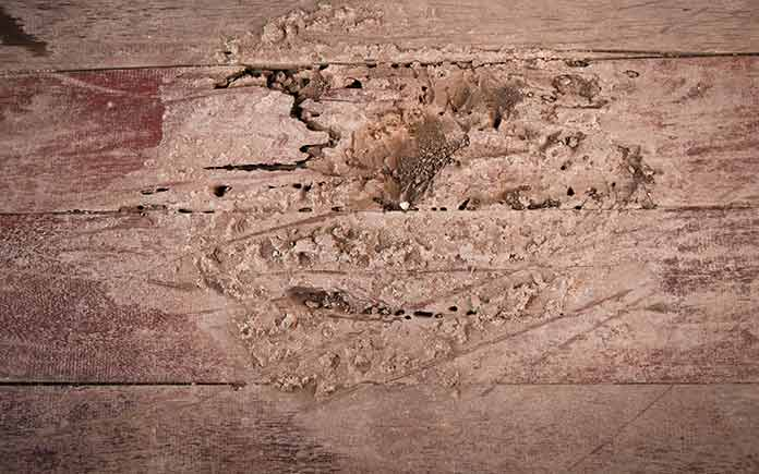 Termite damage on wood floorboards
