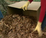 Raking leaves into a cardboard box.