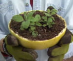 Grapefruit Rind Planting Pot