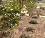 Landscaping with indigenous plants