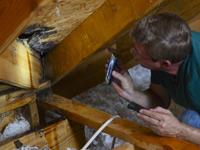Allen Lyle in attic with roof leak.