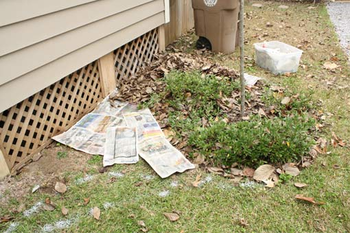 Bed partially complete, newspapers ready for water and mulch