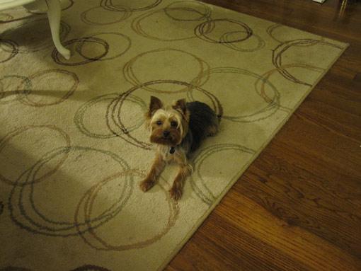 Dog on rug.