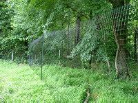 fence trees