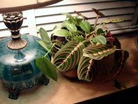 How To Grow Houseplants In Artificial Light Today S Homeowner