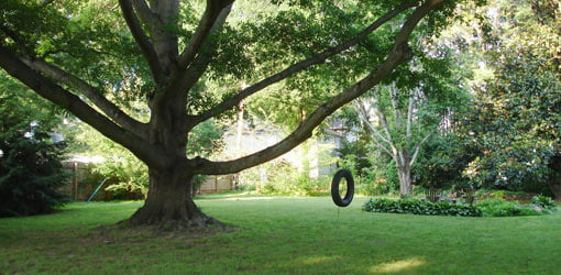 Tire swing attached to oak tree.