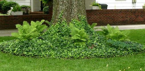 ferns around base of tree