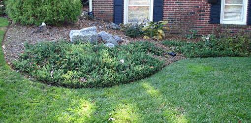 Yard With Deer Resistant Plants