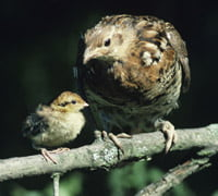 mother bird and baby