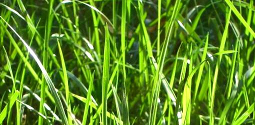 Top-Dressing to Improve the Soil in Your Lawn   Today's