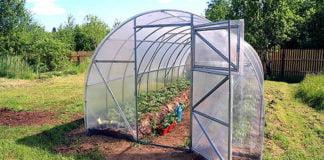 Greenhouse in the backyard