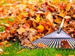 Rake on the ground, resting after a day of raking leaves