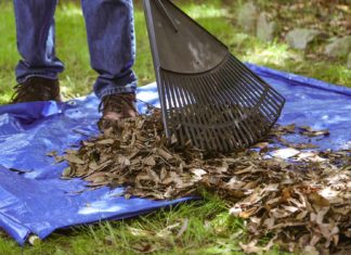 Raking leaves onto a tarp with wooden dowels