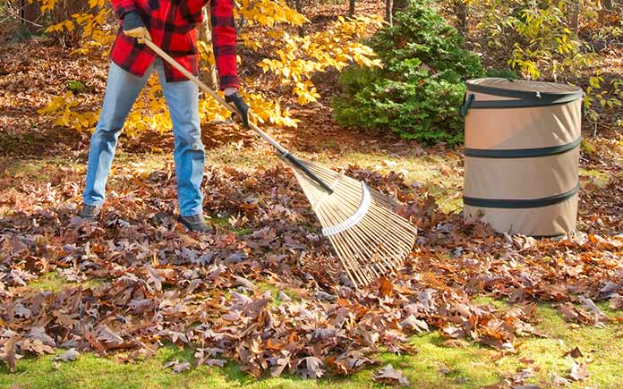 Man raking leaves with a rake in the fall