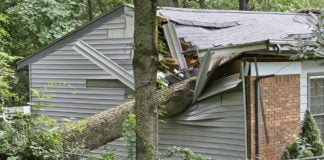 Home damaged by a fallen tree. The tree has crashed into the home's living room.