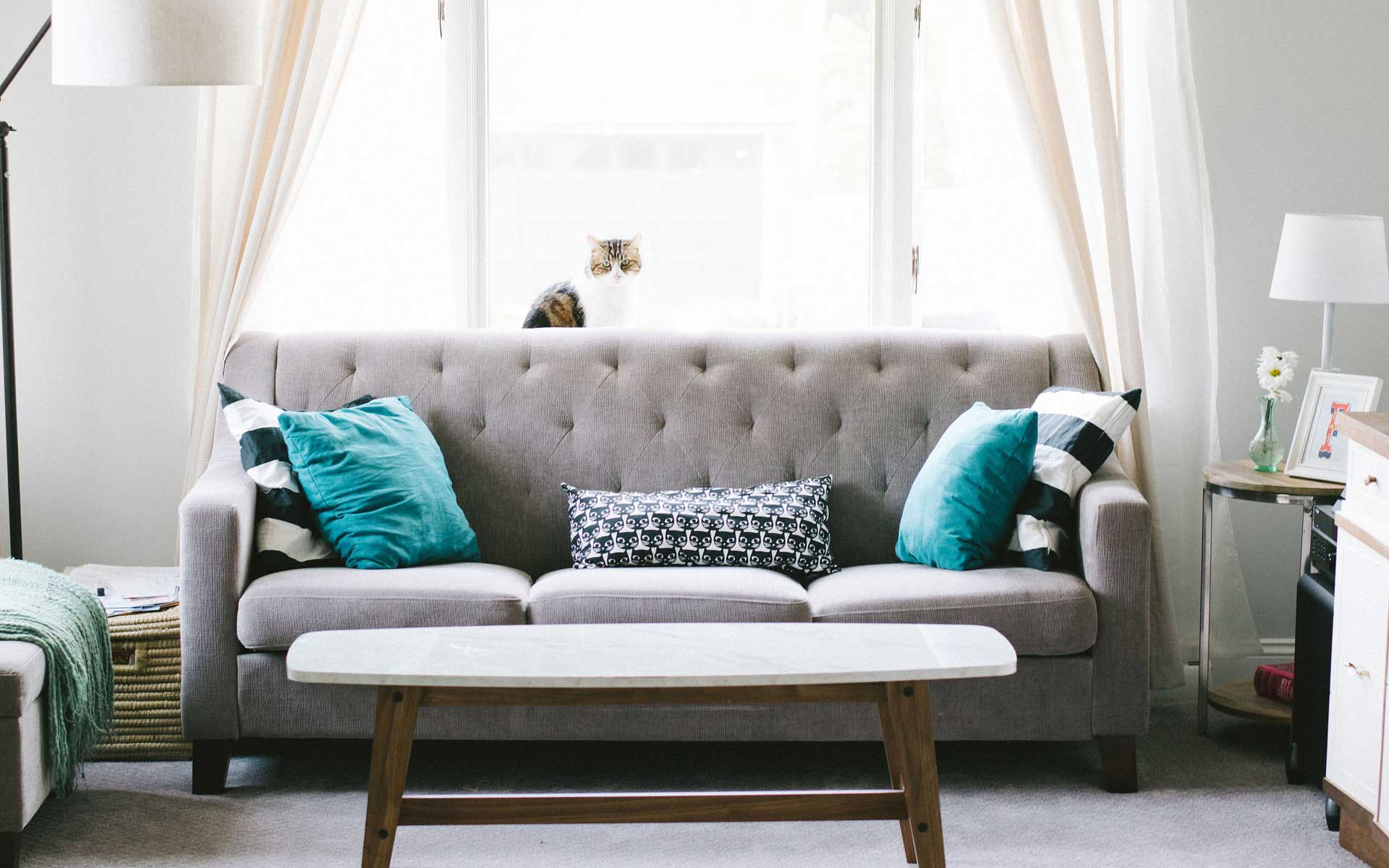 Living room couch with throw pillows and a cat sitting on the console table