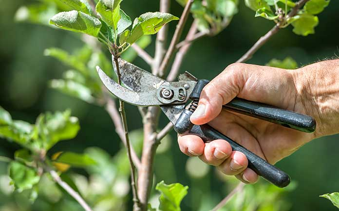 Man pruning tree branches on a sunny day