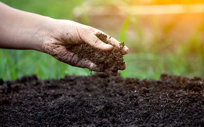 Hand digging into soil to test its quality