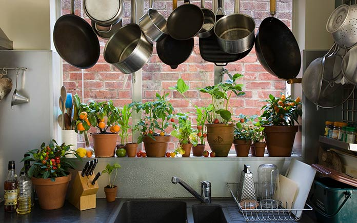 House plants on display below hanging pots and pans, purifying kitchen air