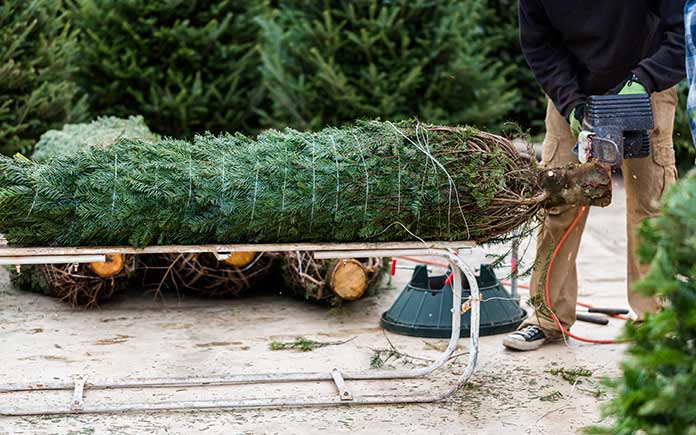 Cutting down Christmas tree at lot