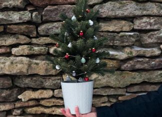 Potted Christmas tree held in person's hand