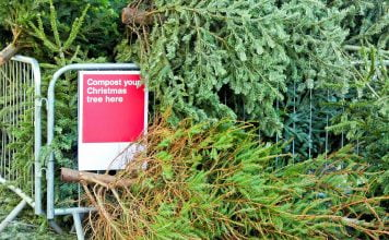 Pile of Christmas trees beside a sign that says, Compost your Christmas tree here.