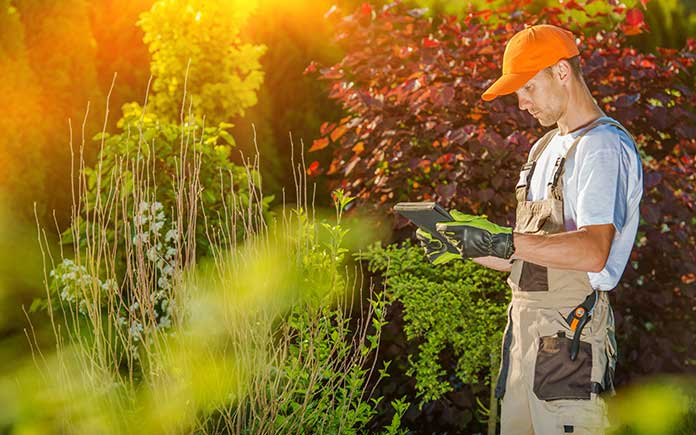 Gardener looking at a tablet in front of shrubs and trees