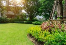 Fresh green Bermuda grass, with a tree and bed of ornamental plants
