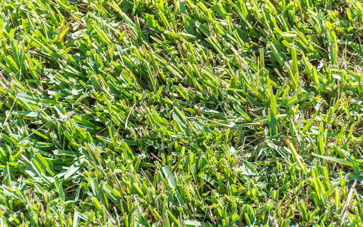 How To Spread Your Centipede Grass Today S Homeowner