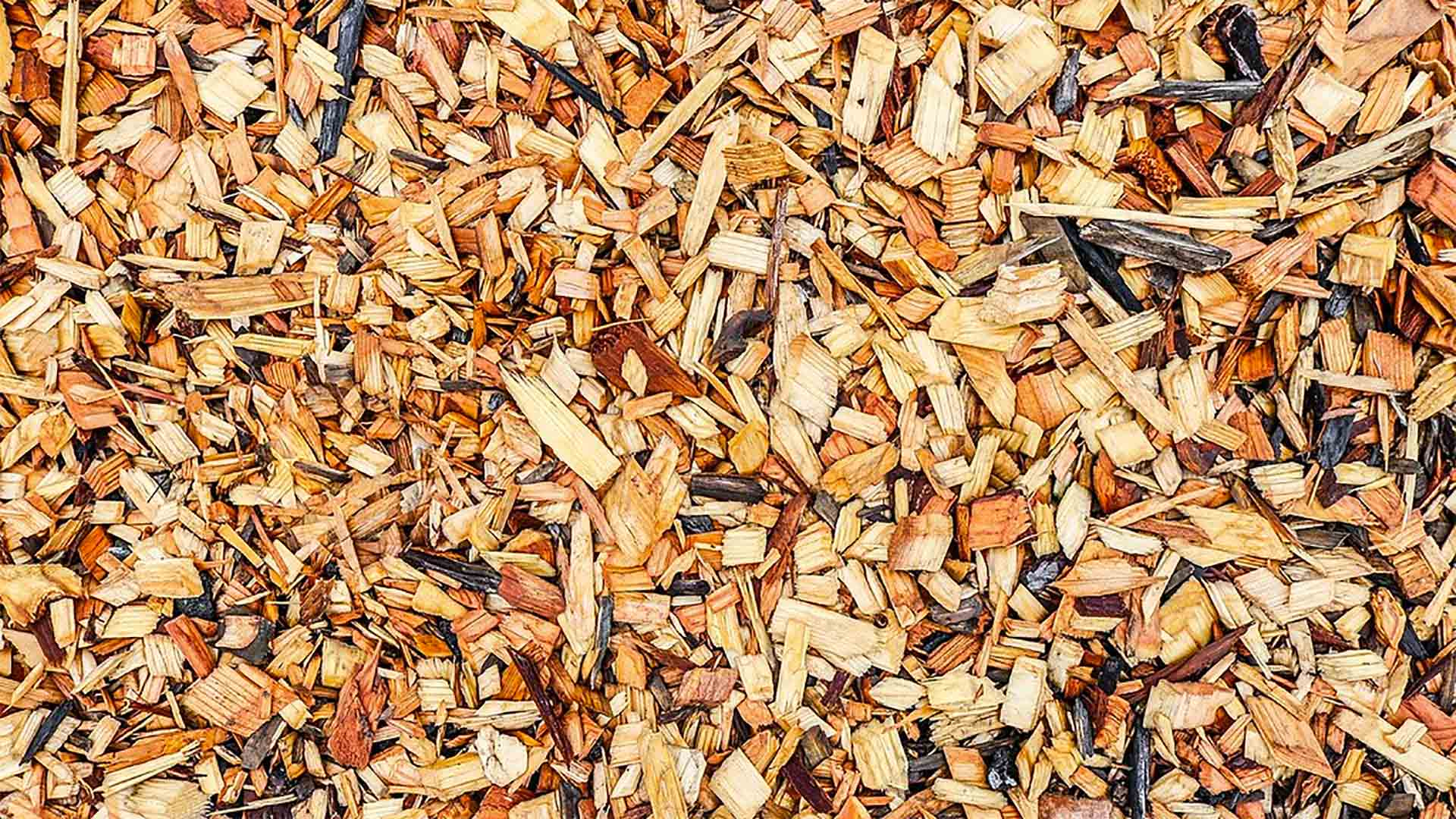 Does Wood Chip Mulch Attract Termites And Other Insects Today S